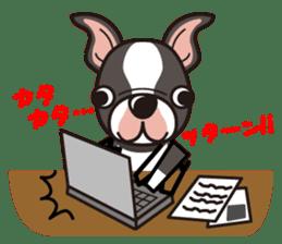 iinu - Boston Terrier sticker #3812531