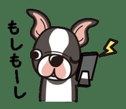 iinu - Boston Terrier sticker #3812537