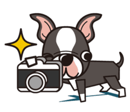 iinu - Boston Terrier sticker #3812560