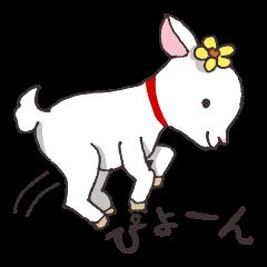Goat heart _Kansai version