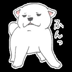 Puppy of white shiba inu