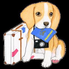Taiwan travel of beagle dogs
