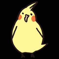 loose cockatiel