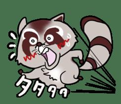 Cheerful raccoon sticker #3949576