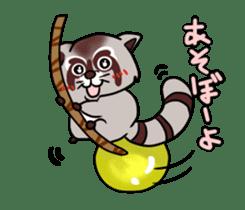 Cheerful raccoon sticker #3949590