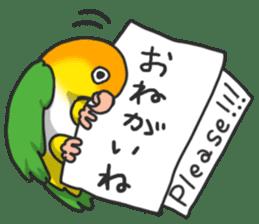 Pionites leucogaster&Black-headed Caique sticker #3978570