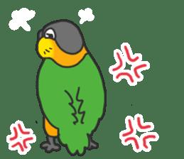 Pionites leucogaster&Black-headed Caique sticker #3978573
