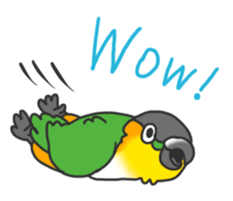 Pionites leucogaster&Black-headed Caique sticker #3978577