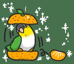 Pionites leucogaster&Black-headed Caique sticker #3978584