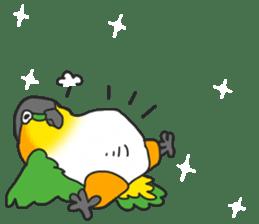 Pionites leucogaster&Black-headed Caique sticker #3978586