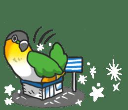 Pionites leucogaster&Black-headed Caique sticker #3978588