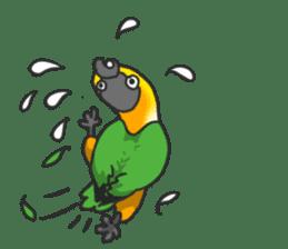Pionites leucogaster&Black-headed Caique sticker #3978591
