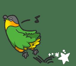 Pionites leucogaster&Black-headed Caique sticker #3978594