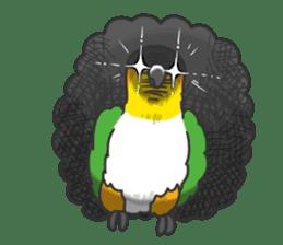 Pionites leucogaster&Black-headed Caique sticker #3978599