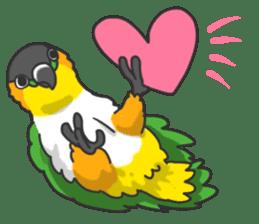 Pionites leucogaster&Black-headed Caique sticker #3978603