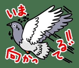 Pigeon Life sticker #4045663