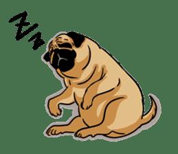 Shy of pug sticker #4087880