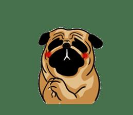 Shy of pug sticker #4087884
