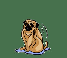 Shy of pug sticker #4087889