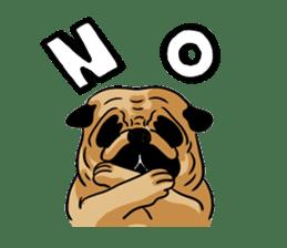 Shy of pug sticker #4087894