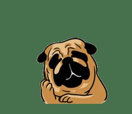 Shy of pug sticker #4087897