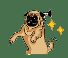Shy of pug sticker #4087899