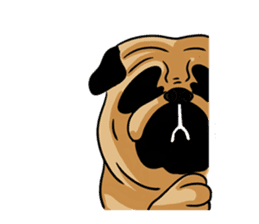 Shy of pug sticker #4087903