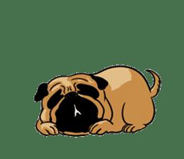 Shy of pug sticker #4087904