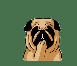 Shy of pug sticker #4087906