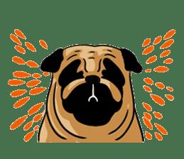 Shy of pug sticker #4087907