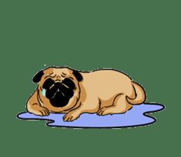 Shy of pug sticker #4087914