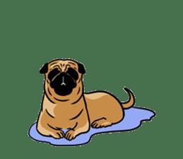 Shy of pug sticker #4087915