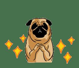 Shy of pug sticker #4087916