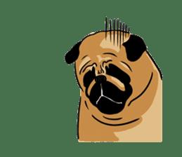Shy of pug sticker #4087919