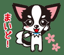 Cute Chihuahua Kansai Words Stickers sticker #4115450