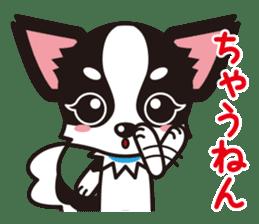 Cute Chihuahua Kansai Words Stickers sticker #4115464