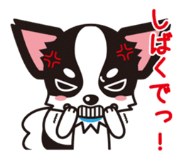 Cute Chihuahua Kansai Words Stickers sticker #4115472