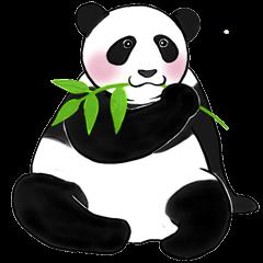 Cute Giant Panda Sticker