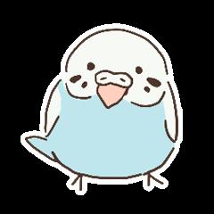 Reticent little parakeet