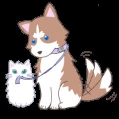 Siberian husky&White cat