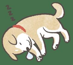 Shiba-Puppy! sticker #4256565