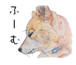 Favorite parts of SHIBAINU 2 sticker #4279343
