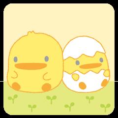 Piyokopiyo the chick bros
