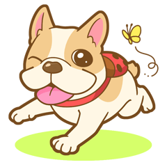 MIRCO of French bulldog