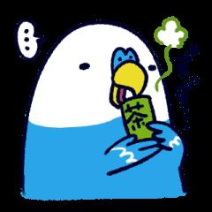 Parakeet INCOCO 2