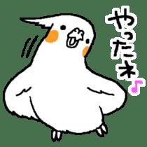 MARU the Cockatiel 2 sticker #4322464