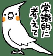MARU the Cockatiel 2 sticker #4322482