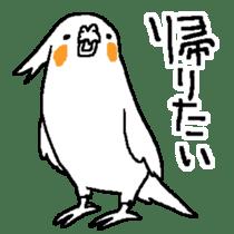 MARU the Cockatiel 2 sticker #4322501