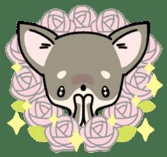 Kawaii Chihuahua2(English) sticker #4391014