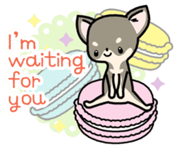 Kawaii Chihuahua2(English) sticker #4391019